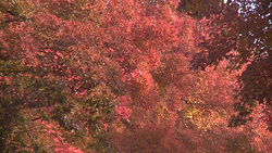 Autumn 001 (stock movie HD material)
